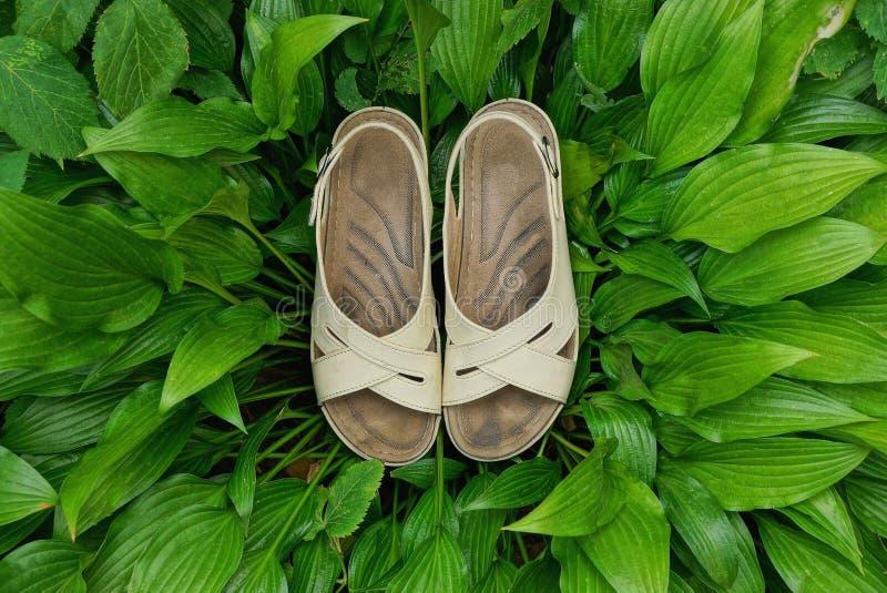 Deux sandales grises tiennent les feuilles vertes des usines photos libres de droits