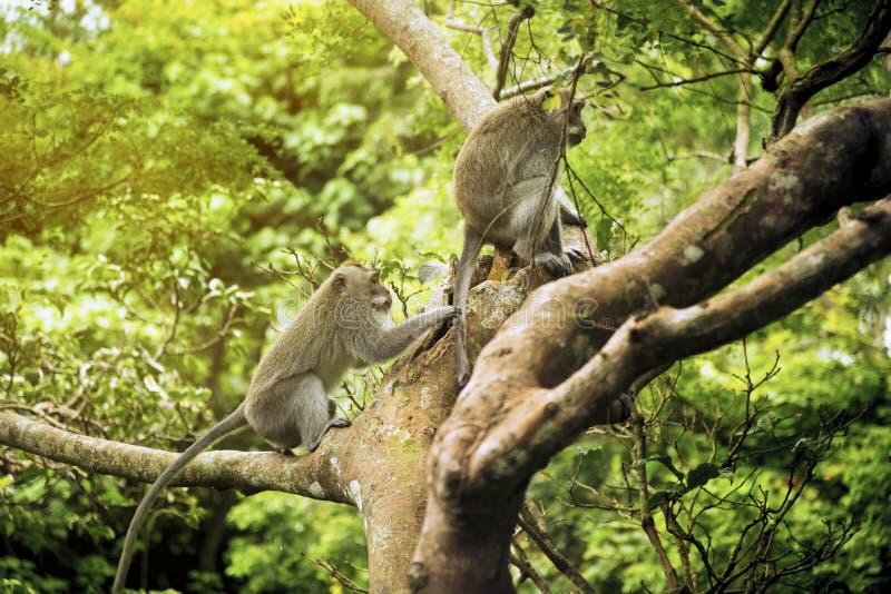 Deux singes sur un arbre photographie stock