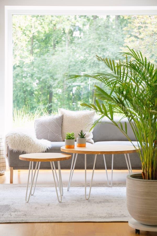 Deux tables d'épingle à cheveux avec le cactus se tenant sur le tapis dans l'intérieur quotidien lumineux de pièce avec l'usine f photos stock