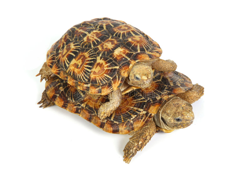 Deux tortues image stock