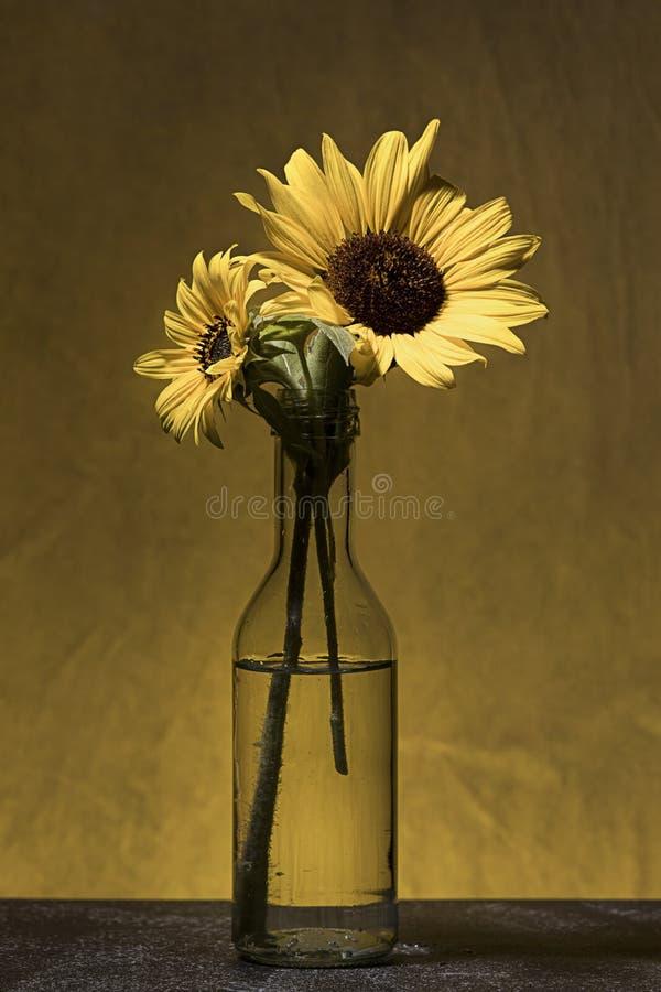 Deux tournesols dans un vase en verre images libres de droits