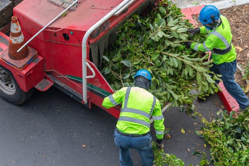 Deux trimmers d'arbre alimentant le woodchipper photo libre de droits