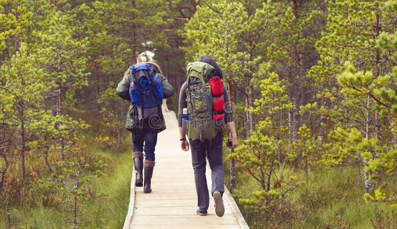 Deux types avec des sacs à dos marchant dans les marais dans le camp de forêt, adven image stock