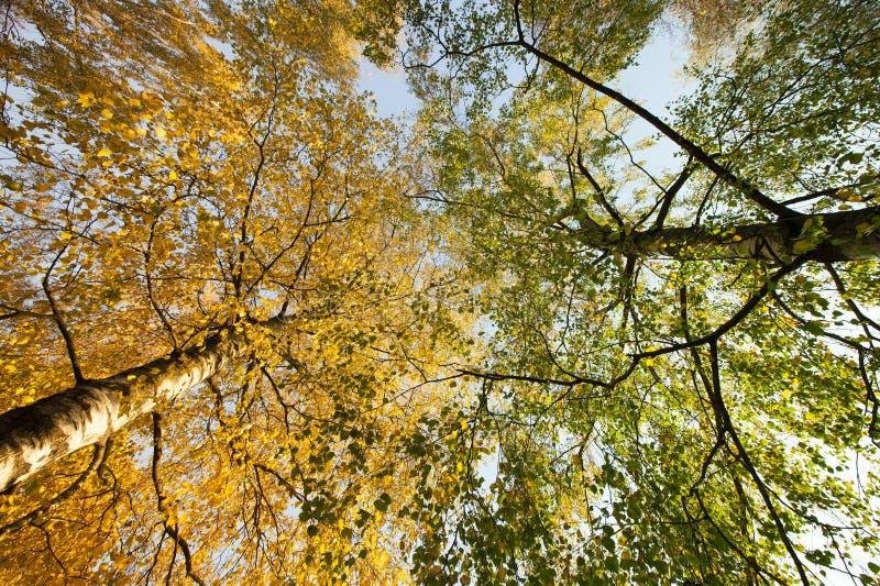 deux types différents d'arbres photographie stock