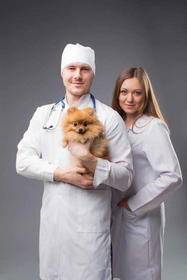 Deux vétérinaires avec le phonendoscope tenant le chien pomeranian mignon photo stock