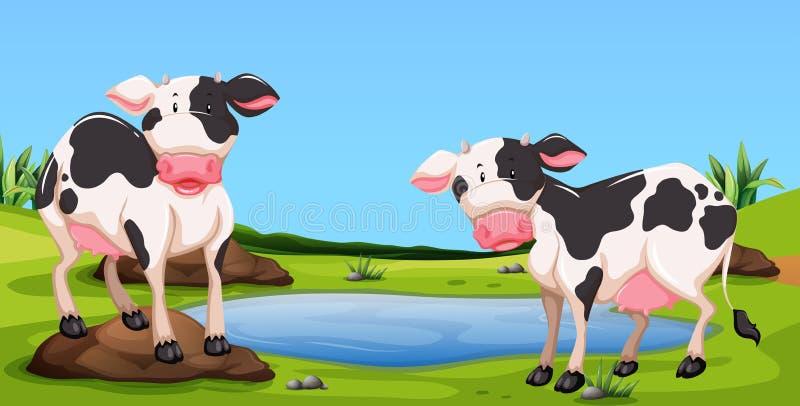 Deux vaches se tenant dans la basse cour illustration de vecteur