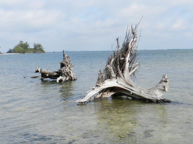 Deux vieux troncs et racines d'arbre tombés plus d'en rivière photos stock