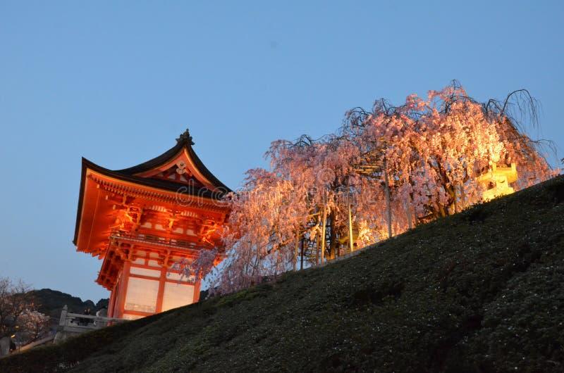 Deva brama lub drzewo Niomon i Sakura fotografia royalty free