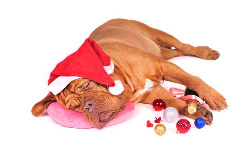 Devant la fête de Noël images stock