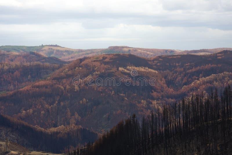 Devastación de Bushfire imagen de archivo