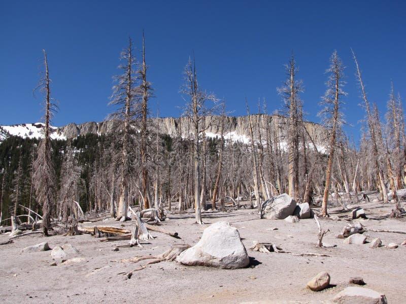 Download Devastated forest stock photo. Image of woods, destruction - 10842604