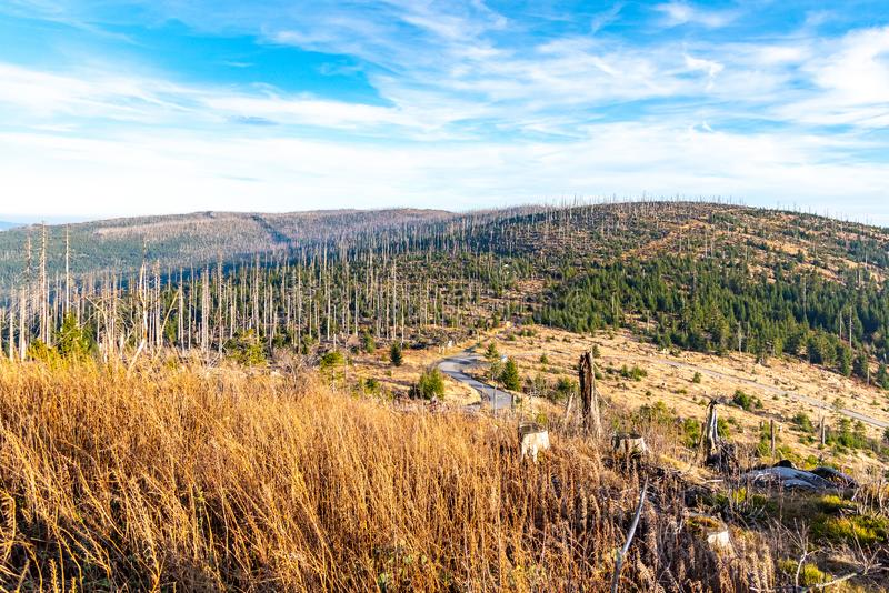 Devasted forest in caues of bark beetle infestation. Sumava National Park and Bavarian Forest, Czech republic and stock photos