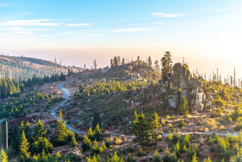 Devasted las w caues korowatej ścigi infestation Sumava park narodowy i Bawarski las, republika czech i fotografia royalty free