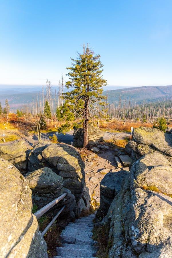Devasted las w przyczynie korowatej ścigi infestation Sumava park narodowy i Bawarski las, republika czech i obrazy stock