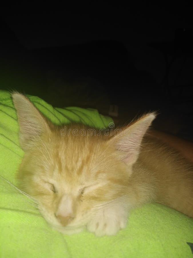Devil kitten sleeping stock photo