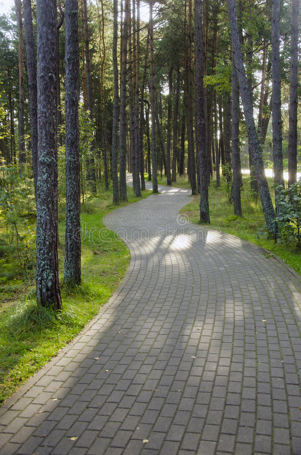 Devious paved path tiles in pine forest. Devious path paved with rectangular tiles in a pine forest royalty free stock image