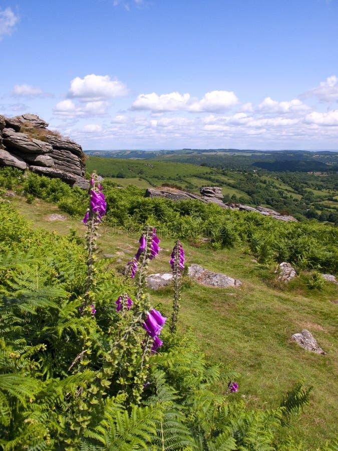 Devon escénico - Dartmoor imagen de archivo libre de regalías