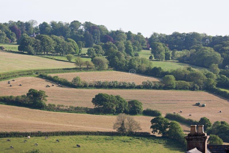 Devon gospodarstwo rolne w wczesnym lecie obrazy royalty free