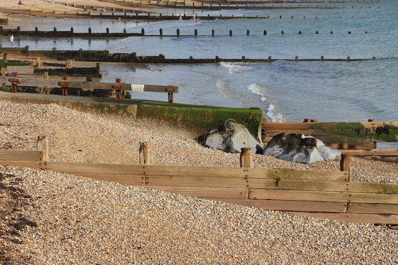 Devon groynes. Groynes erected to stop migrating tidal currents draging the beach substate of shingle or gravel mixed with sand and hence leaving a bare seafloor royalty free stock photos
