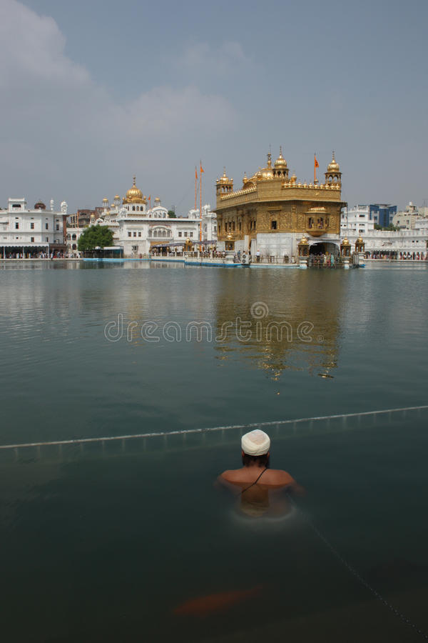 A devotee in nectar pool of Golden Temple royalty free stock images