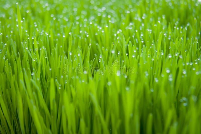 Dew stock photo