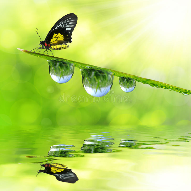 Download Dew and butterfly stock image. Image of environmental - 39239755