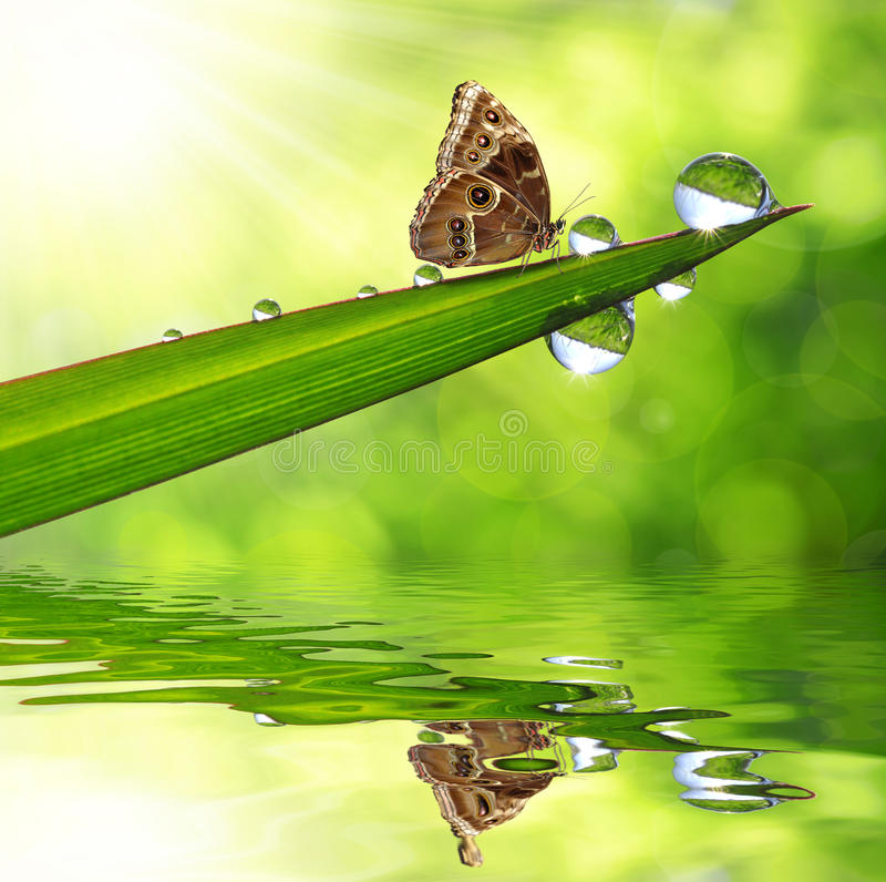 Download Dew And Butterfly Stock Photo - Image: 39239906