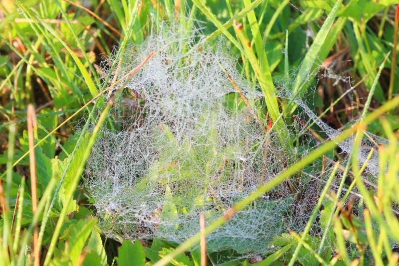 Dew on cobweb stock image