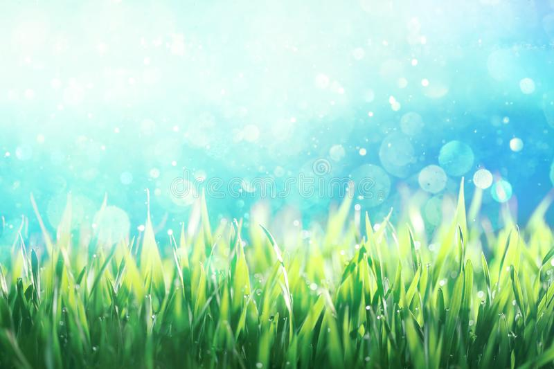 Dew covered green grass against blue sky royalty free stock photos