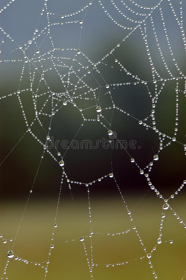 Download Dew Covered Spider Web Stock Images - Image: 28325954