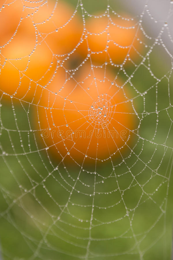 Dew Covered Spider Web in Front of Pumpkin stock photos