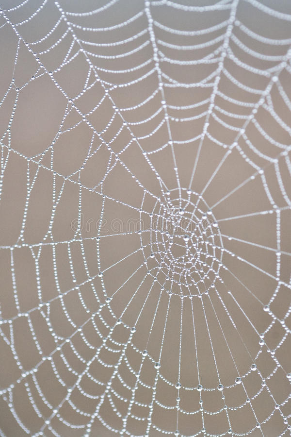Download Dew covered spiderweb stock image. Image of background - 17850055