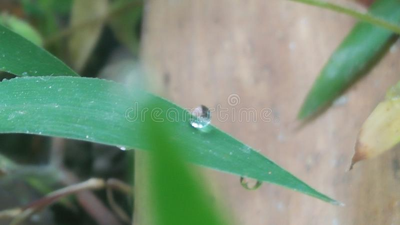 Dew drop royalty free stock photo
