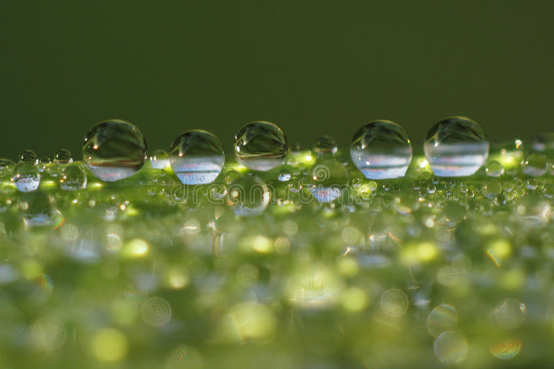 Download Dew Droplets On Grass Blade - Macro Stock Image - Image of up, space: 13923465