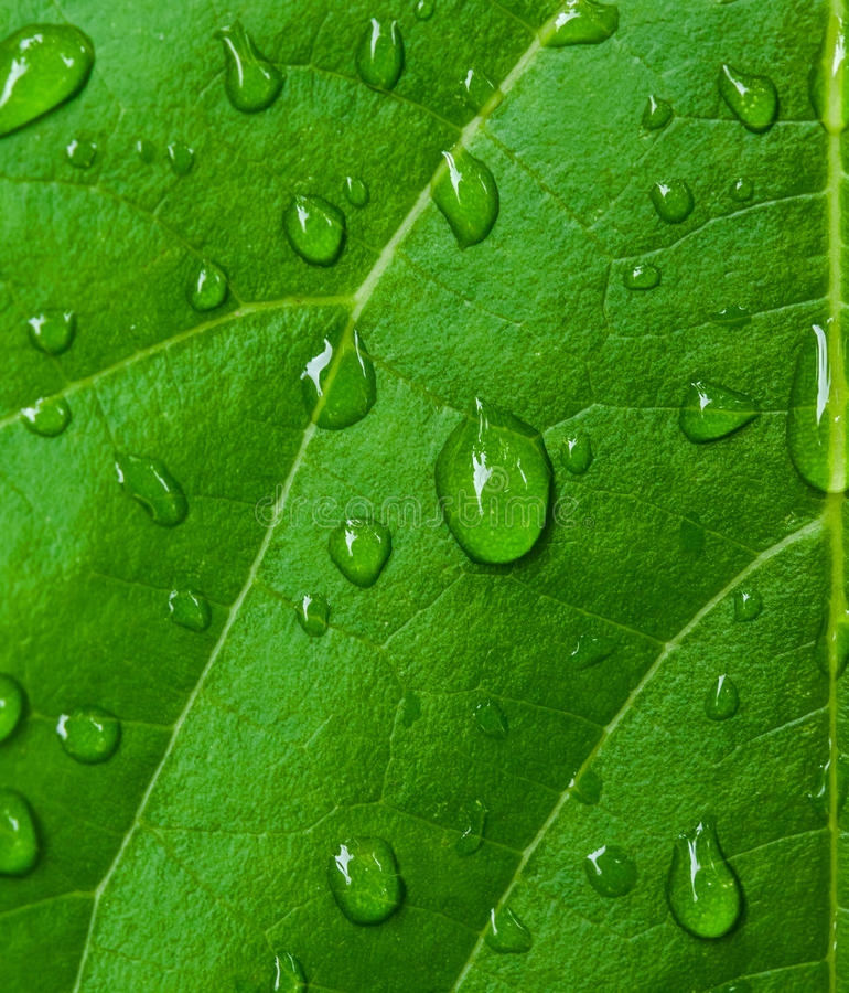Dew droplets royalty free stock photos