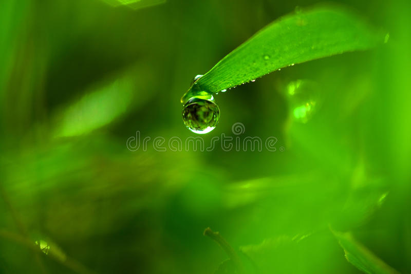 Dew drops. stock image