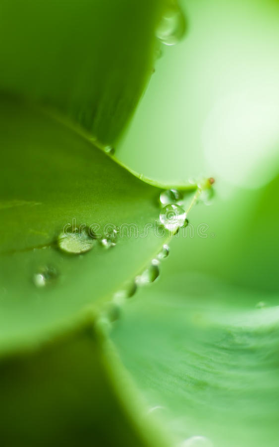 Download Dew drops stock photo. Image of outdoors, grass, healthy - 24743668