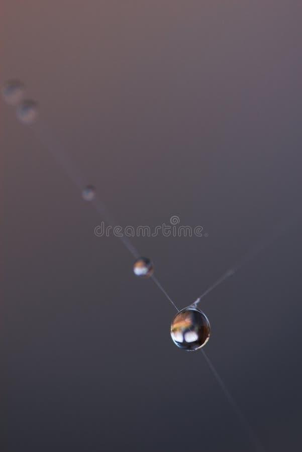 Download Dew Drops stock image. Image of early, macro, drop, gray - 2864833