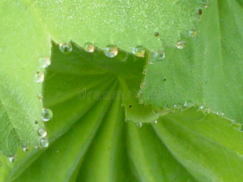 Dew Drops Free Public Domain Cc0 Image