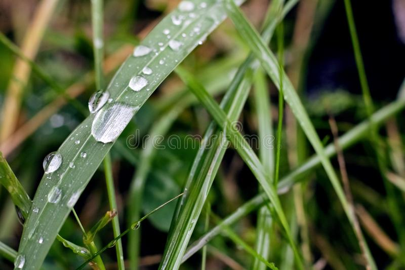 Dew drops on the blades of grass stock photo