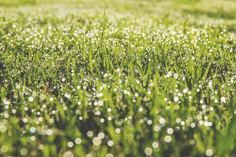 Dew drops on field of grass stock photo