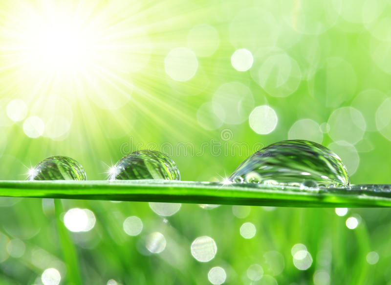 Download Dew Drops Stock Photo - Image: 39005169