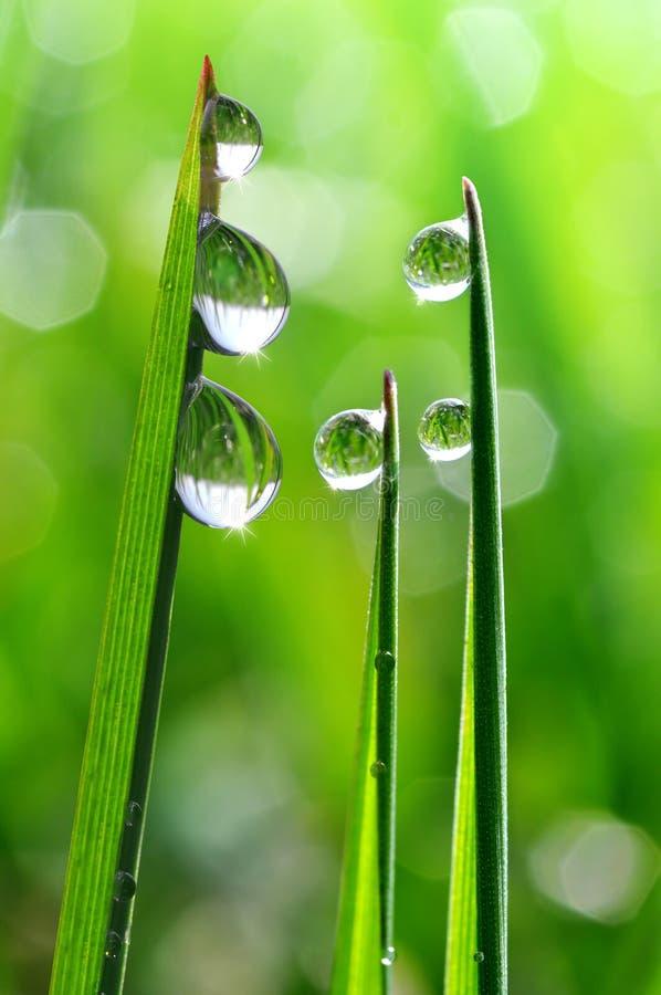 Download Dew drops stock photo. Image of plant, bubble, bright - 39239550