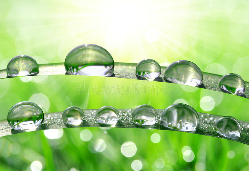 Download Dew drops stock photo. Image of perfection, raindrop - 39239564