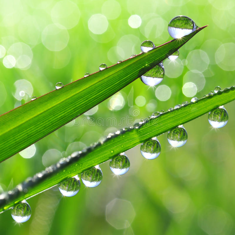 Download Dew Drops Stock Photo - Image: 39239841