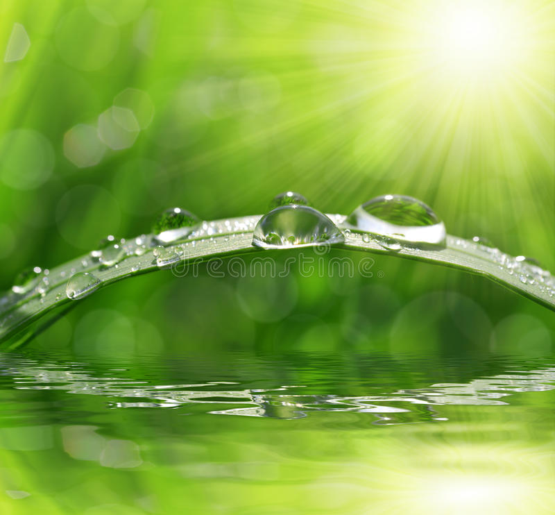 Dew drops stock photography