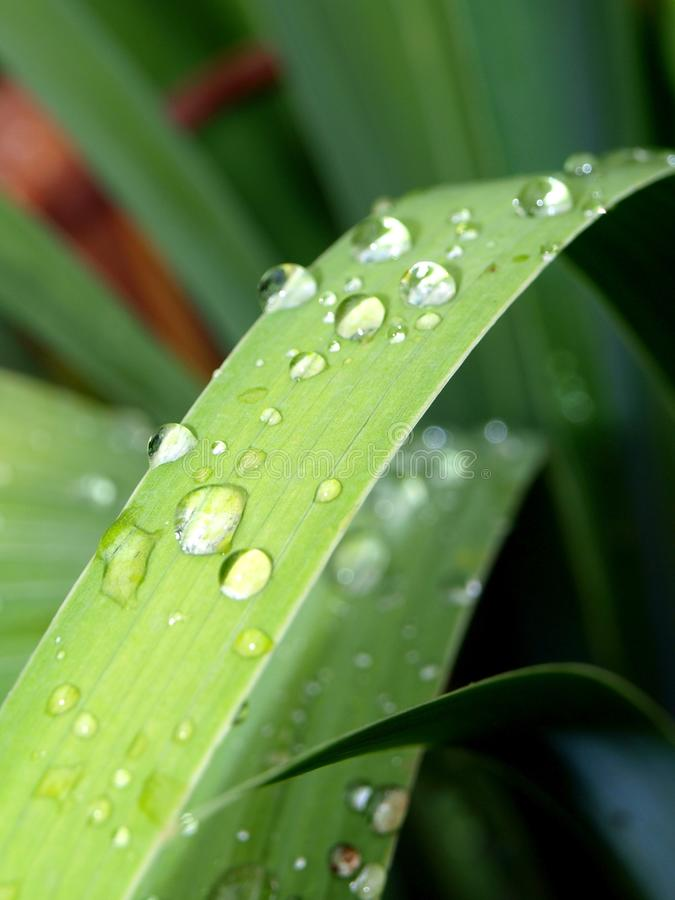 Dew Drops On A Grass Stock Photos