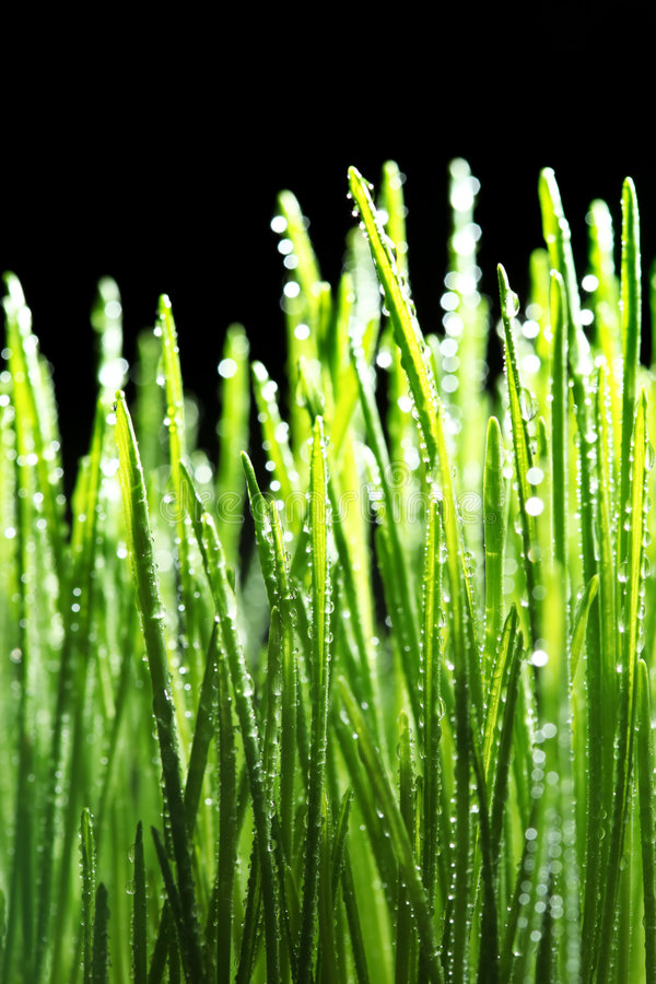 Dew drops on grass stock images