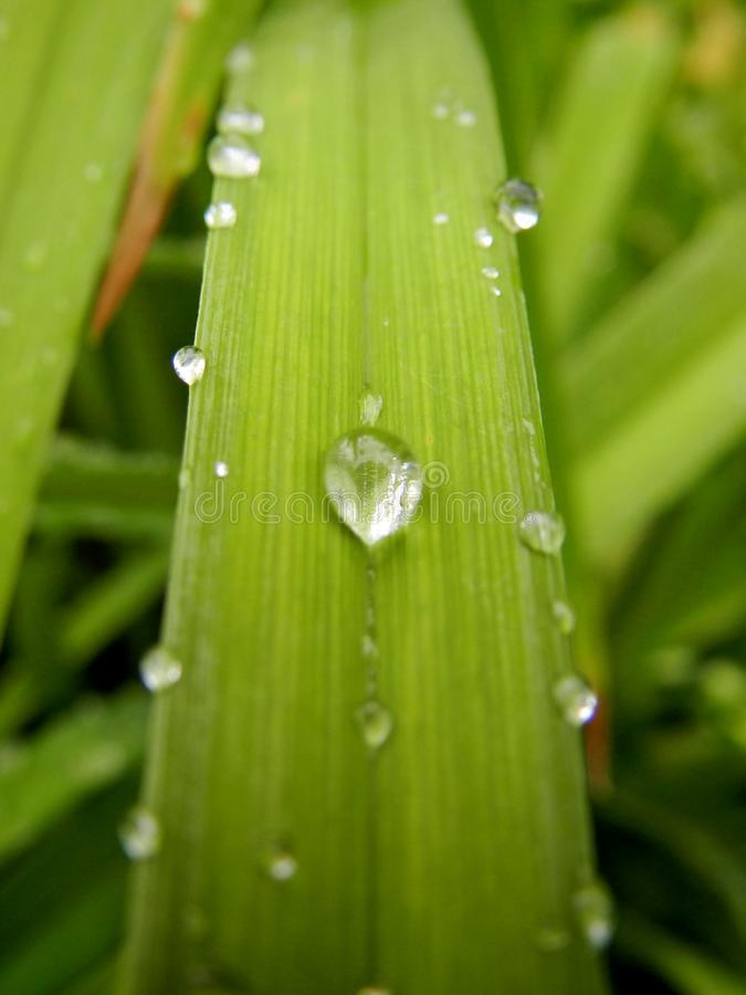 Dew drops on the grass stock images