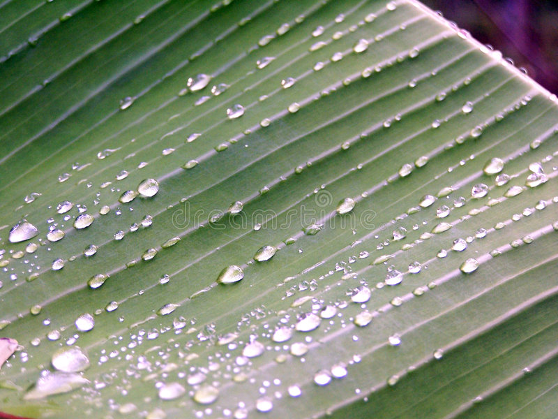 Download Dew drops on green stock photo. Image of fresh, morning - 109024